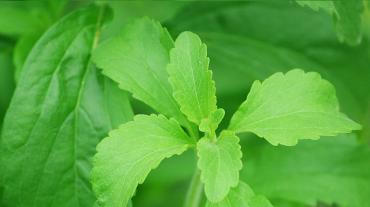 Stevia: ¿Una tendencia mundial?